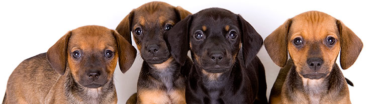 All about pets provo veterinarian in utah county puppy care solutioingenieria Images