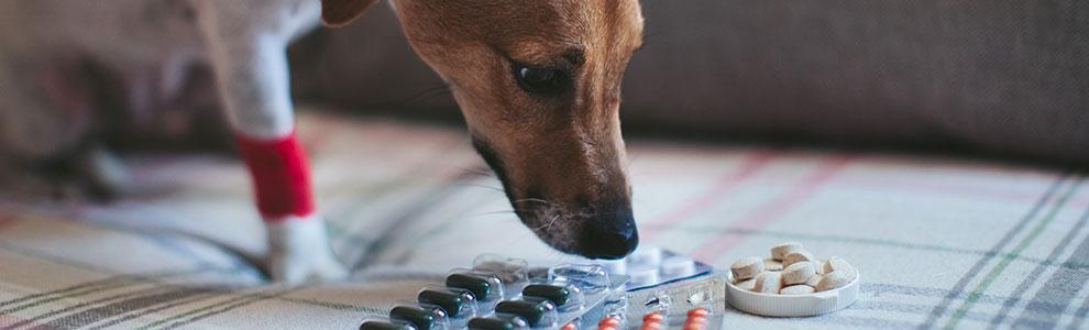 Dog Taking Pills