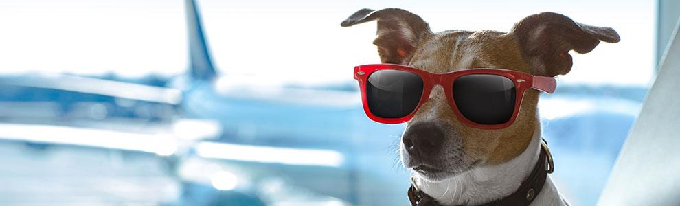 Dog International Travel