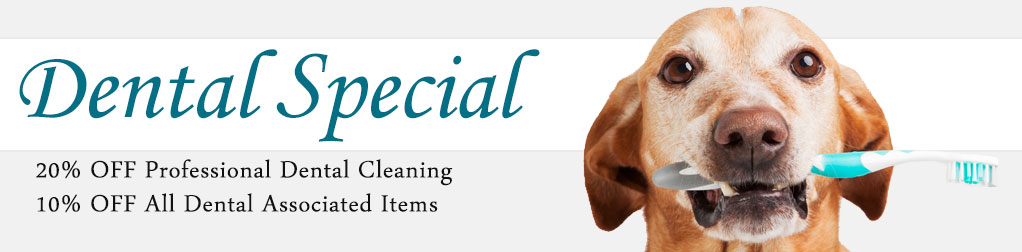 Dental Special