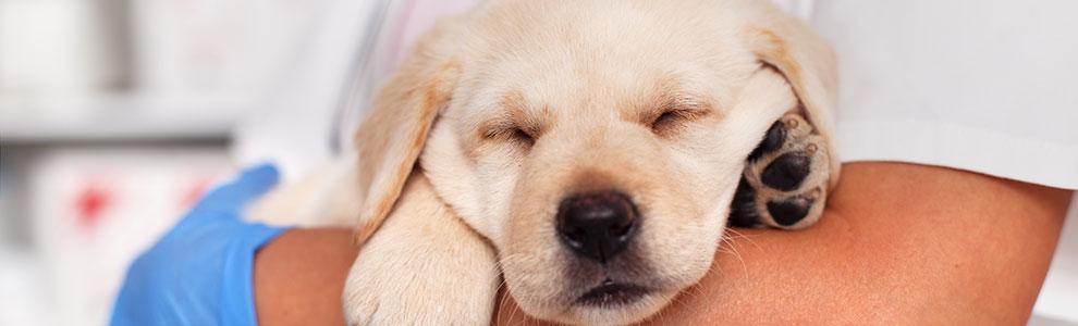 Puppy Veterinarian