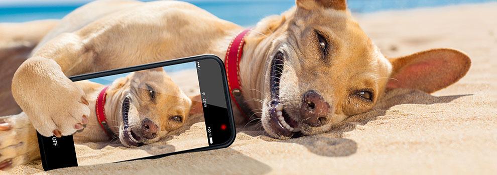 Smartphone Pet Photography