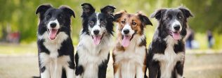 8 Different Jobs For Dogs