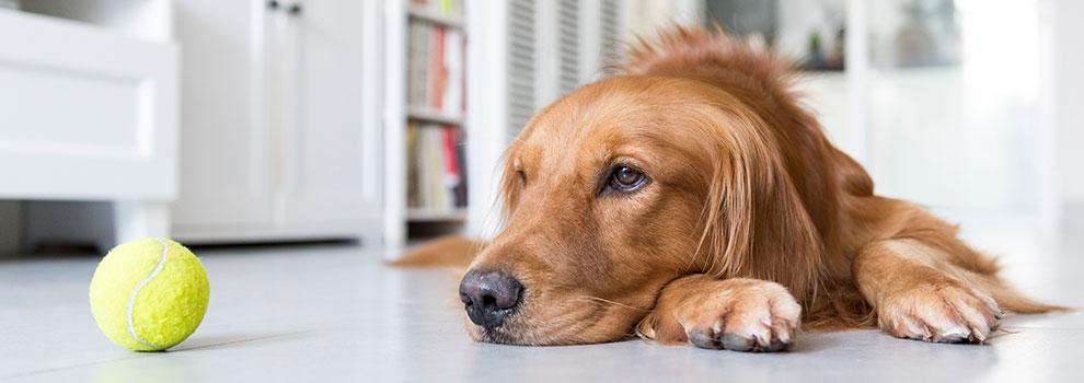 Dog Activity Level