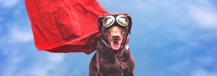 If Dogs Were Superheroes