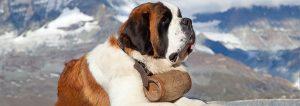 Dog Hiking Equipment