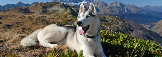 The Beginner's Guide To Hiking With Dogs