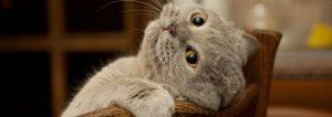 Cat Mental Health