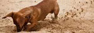 Dog Sandpit