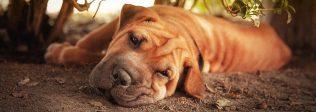 11 Dog Backyard Ideas For Your Furry Friend