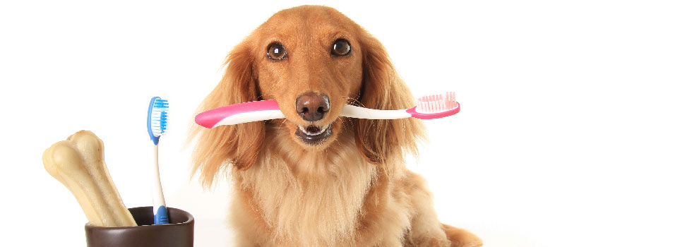 Dog Brush Teeth