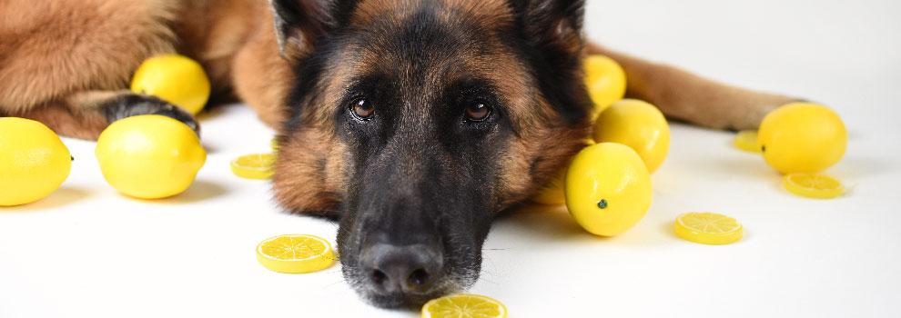 Lemon Additive