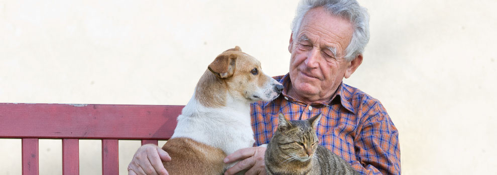 Pets For Elderly
