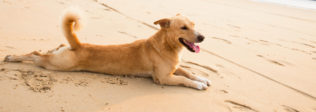 Dog Sunburns Complete Guide: Everything You Should Know
