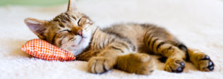 The Best Cat Care Tips For First Time Owners