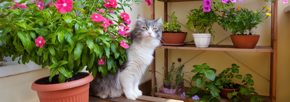 Cat In House Plants
