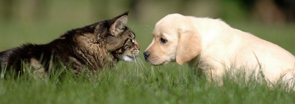 Cat Dog Exchange Sents