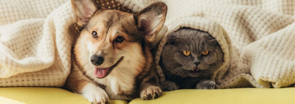 Dog & Cat Playing