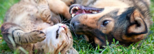 5 Tips On How to Introduce a Puppy to a Cat