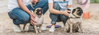 Ways To Help Your Local Animal Shelter