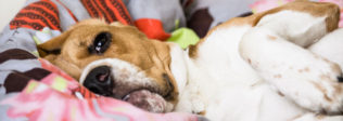 The Top 13 Dog Health Problems You Should Be Aware Of